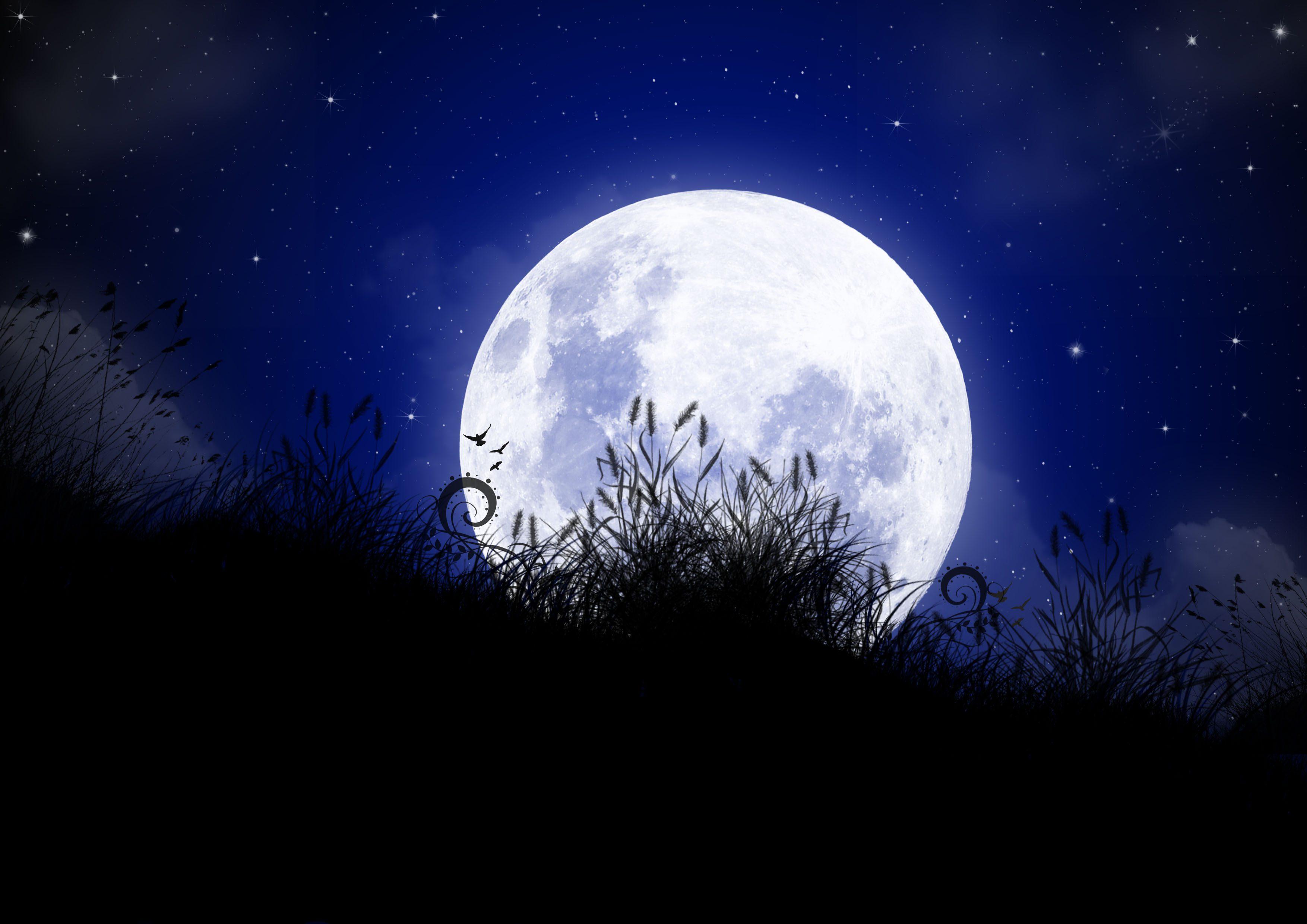 under-the-moonlight
